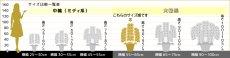 画像6: 【上級 鳴滝清流こちょうらん 2本立】*白*(大輪)<7つの特典付き!> (6)